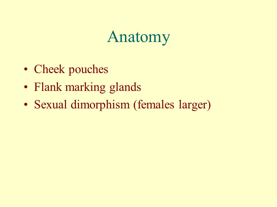 Anatomy Cheek pouches Flank marking glands Sexual dimorphism (females larger)