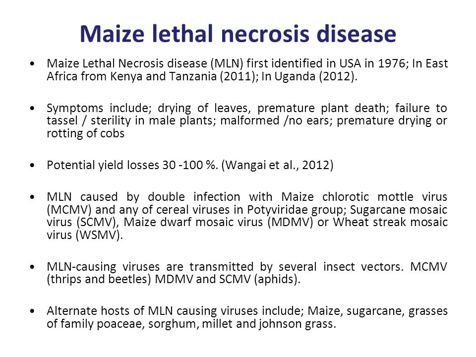 Maize lethal necrosis disease Maize Lethal Necrosis disease (MLN) first identified in USA in 1976; In East Africa from Kenya and Tanzania (2011); In Uganda (2012).