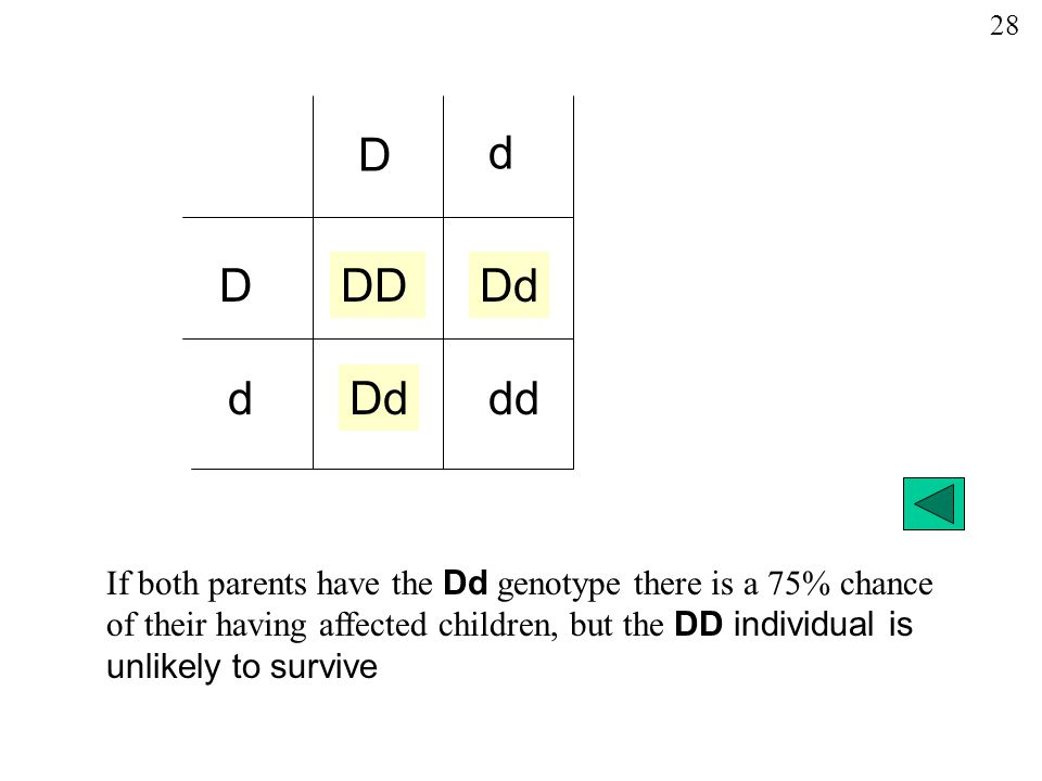 If both parents have the Dd genotype there is a 75% chance of their having affected children, but the DD individual is unlikely to survive D DDDDd dd d d 28