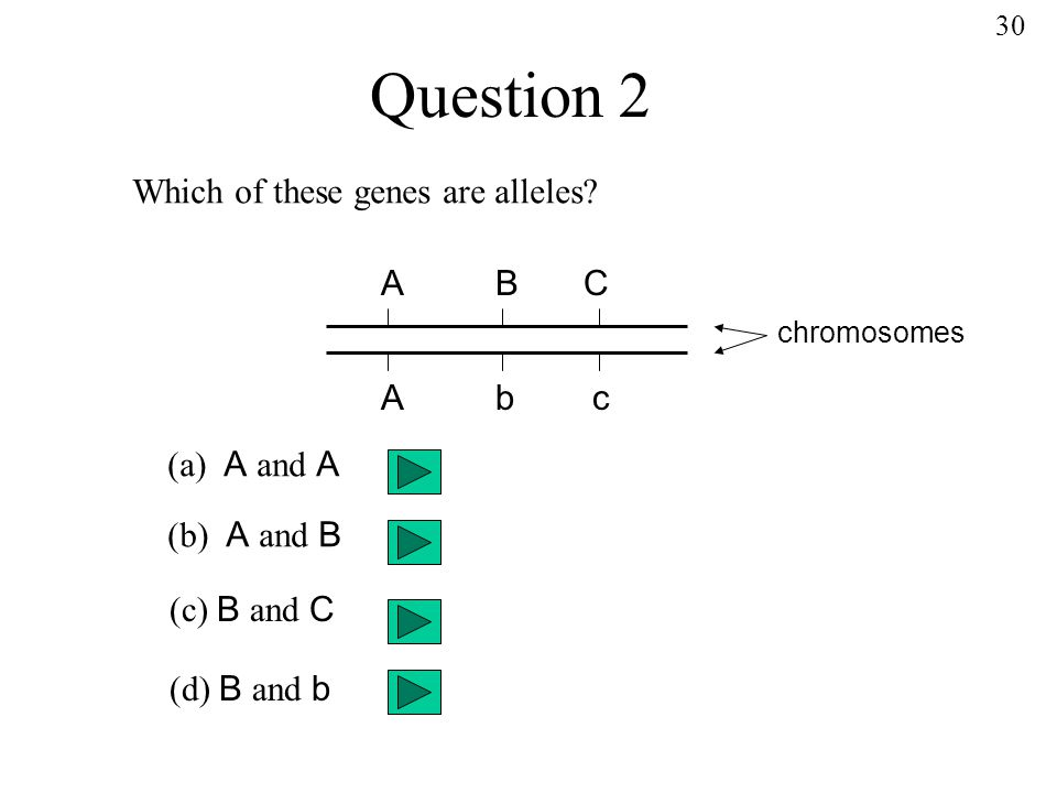 Question 2 ABC Abc Which of these genes are alleles.