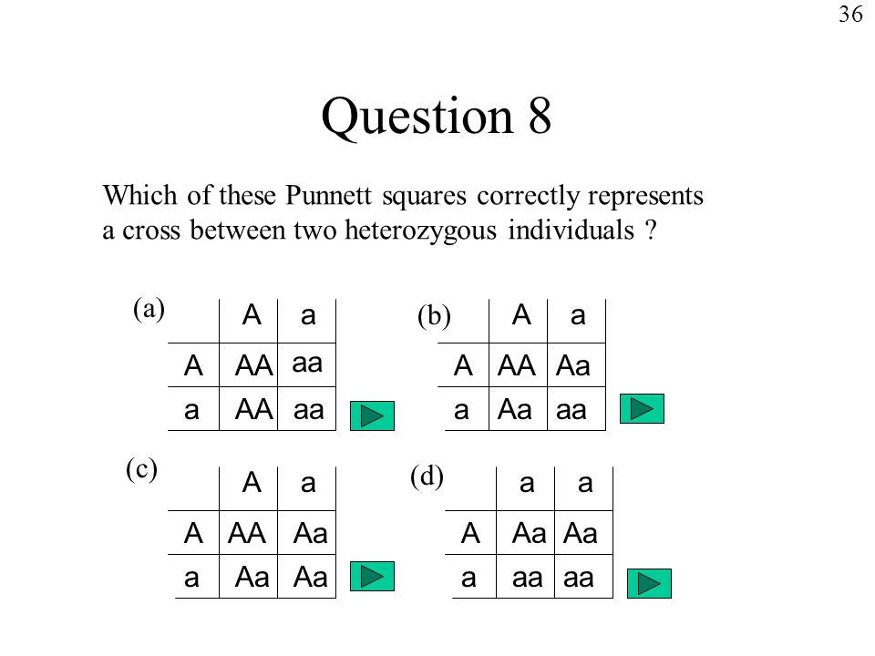 Question 8 Which of these Punnett squares correctly represents a cross between two heterozygous individuals .