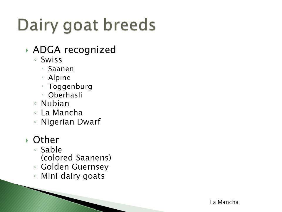  ADGA recognized ◦ Swiss  Saanen  Alpine  Toggenburg  Oberhasli ◦ Nubian ◦ La Mancha ◦ Nigerian Dwarf  Other ◦ Sable (colored Saanens) ◦ Golden Guernsey ◦ Mini dairy goats Saanen La Mancha Oberhasli Nubian Toggenbur g Alpine
