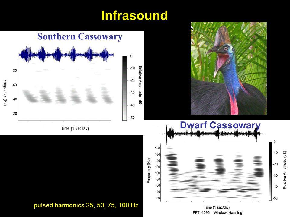 Southern Cassowary Dwarf Cassowary pulsed harmonics 25, 50, 75, 100 Hz Infrasound