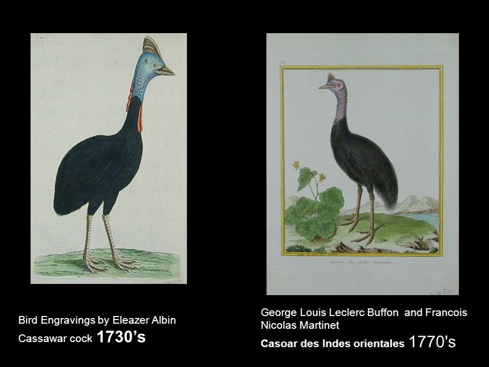 Bird Engravings by Eleazer Albin Cassawar cock 1730's George Louis Leclerc Buffon and Francois Nicolas Martinet Casoar des Indes orientales 1770's