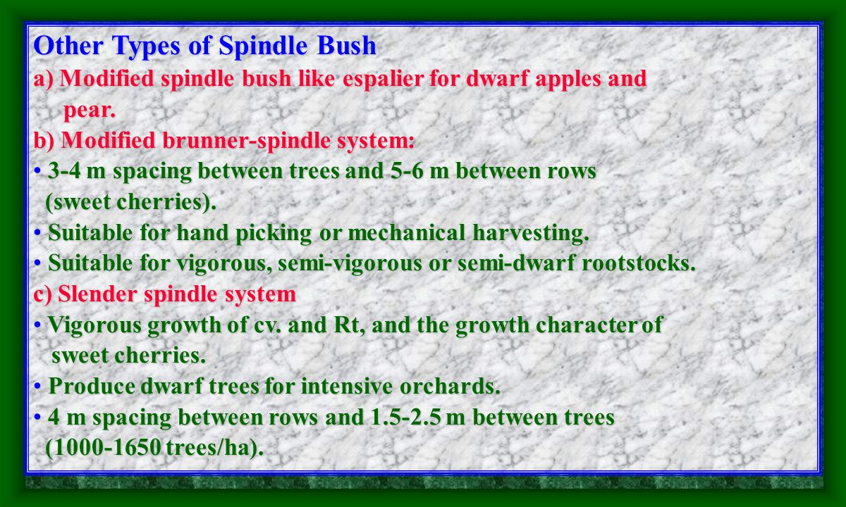 4. Spindle Bush It is between the bush form and It is between the bush form and vertical cordon.