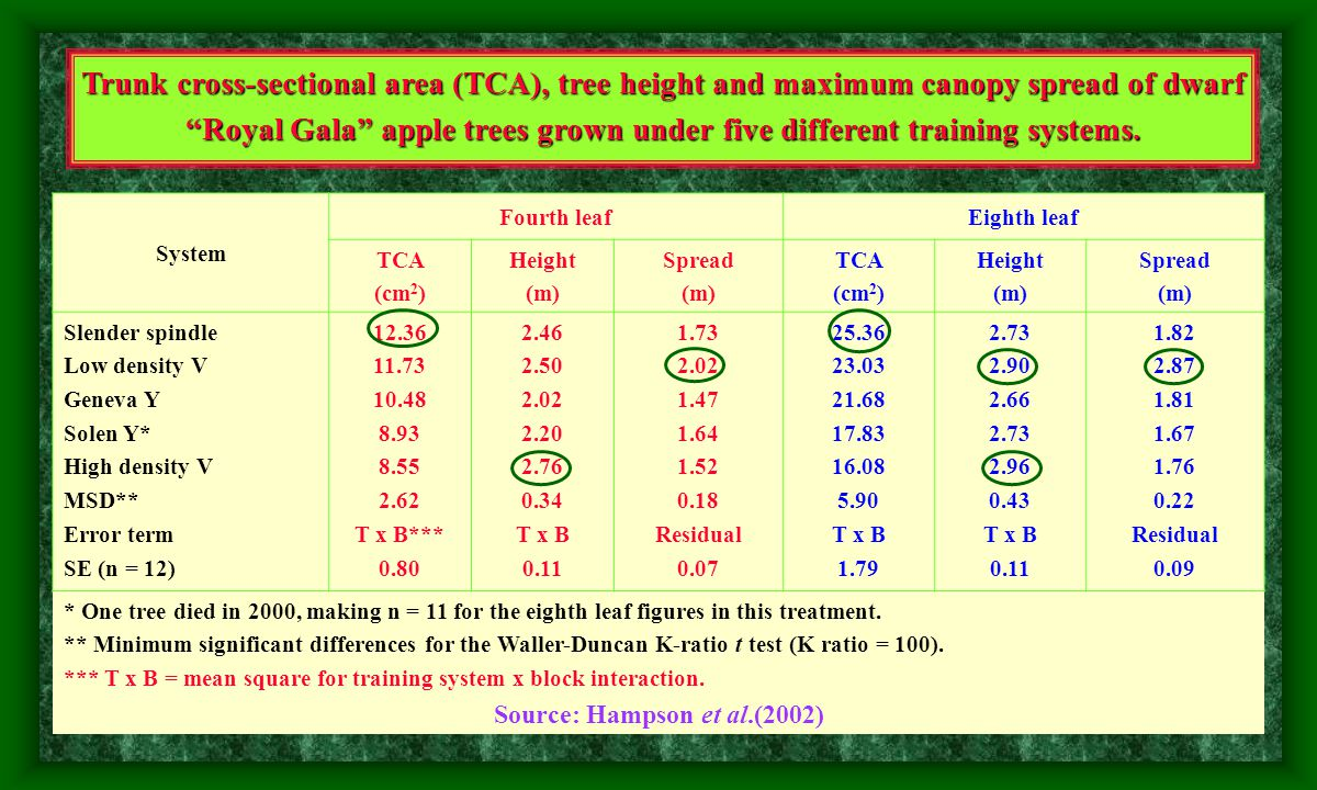 Leaf area, leaf area index (LAI), total dry weight per unit leaf area (TDW/LA) and fruit dry weight per unit leaf area (FDW/LA) for Flordaprince peach trees trained either to central leader (CL) or Y shape (Y).