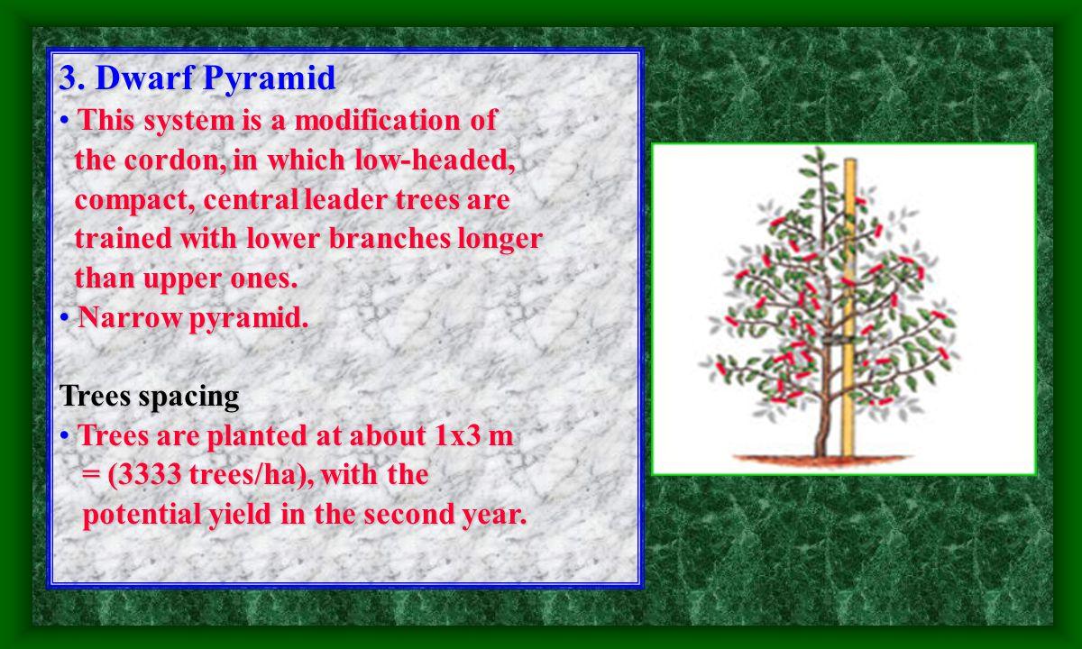 2. Pillar System (columnar canopy shape) (columnar canopy shape) It is a modified vertical cordon It is a modified vertical cordon without support. wi