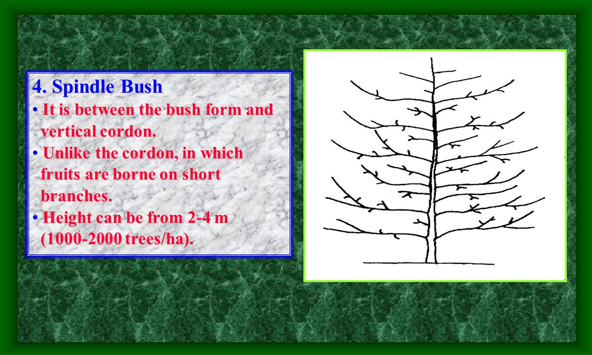 4.Spindle Bush It is between the bush form and It is between the bush form and vertical cordon.