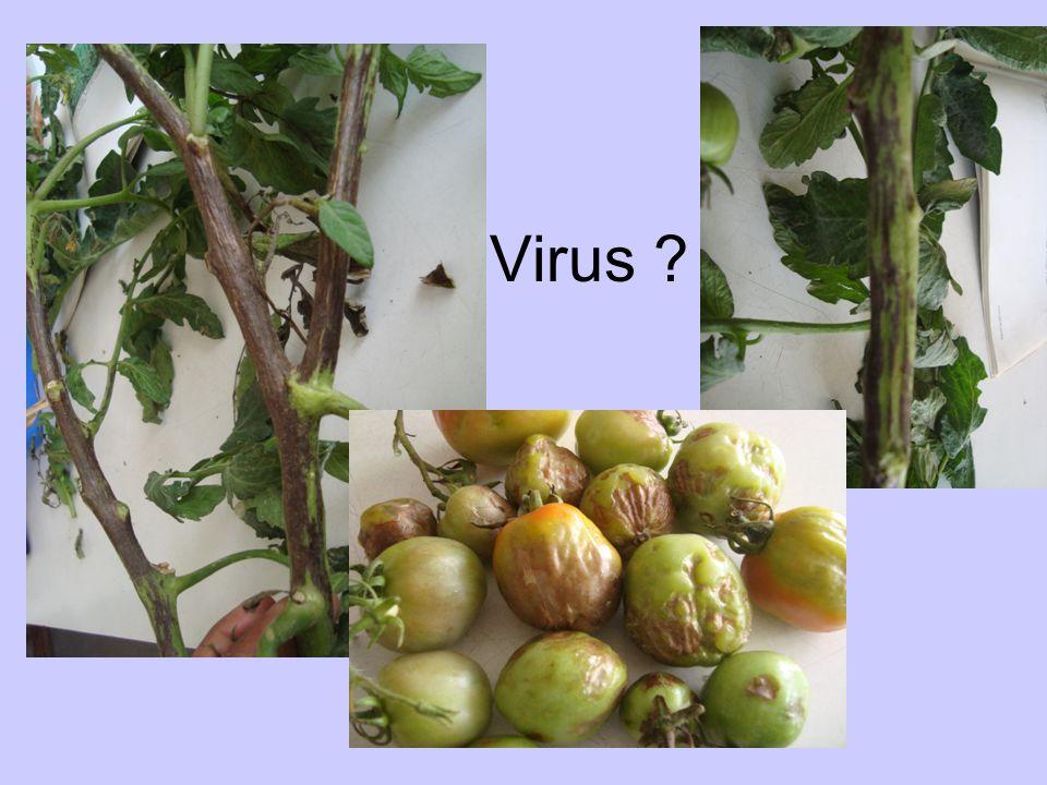 Virus ?