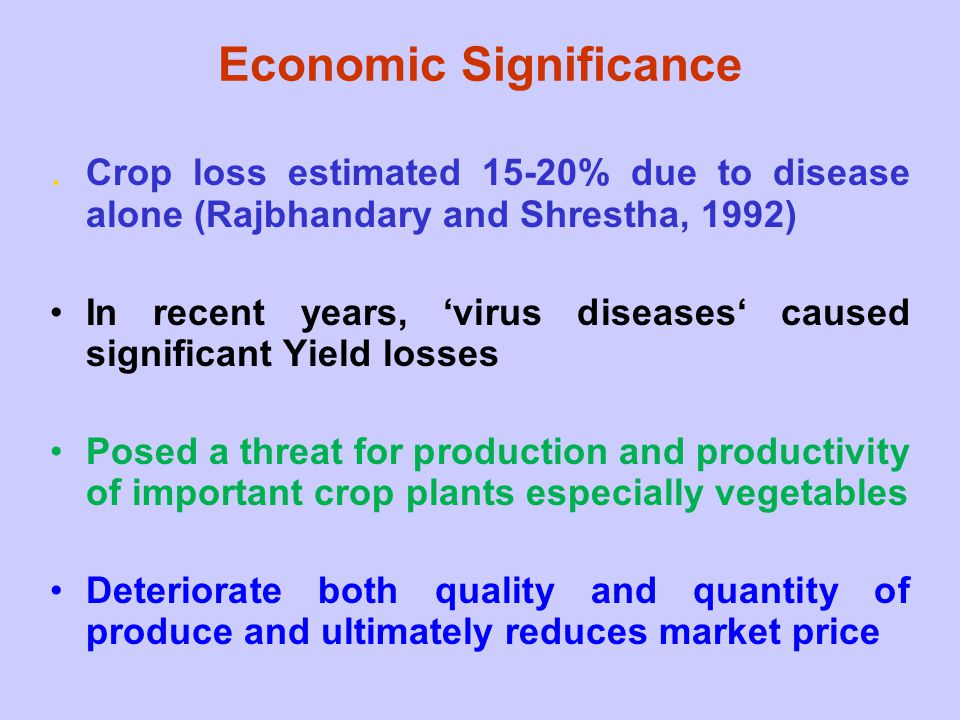 Economic Significance. Crop loss estimated 15-20% due to disease alone (Rajbhandary and Shrestha, 1992) In recent years, 'virus diseases' caused signi