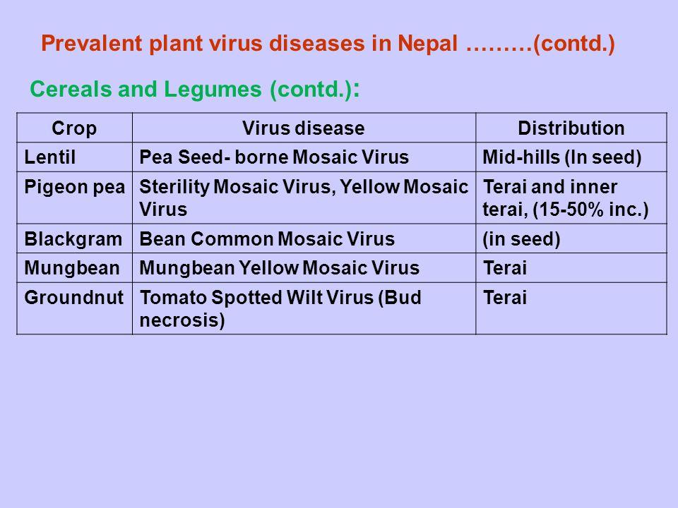 Prevalent plant virus diseases in Nepal ………(contd.) CropVirus diseaseDistribution LentilPea Seed- borne Mosaic VirusMid-hills (In seed) Pigeon peaSter