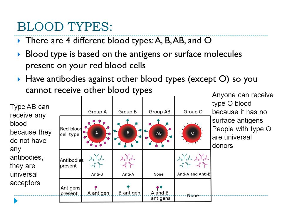 BLOOD TYPES:  There are 4 different blood types: A, B, AB, and O  Blood type is based on the antigens or surface molecules present on your red blood cells  Have antibodies against other blood types (except O) so you cannot receive other blood types Anyone can receive type O blood because it has no surface antigens People with type O are universal donors Type AB can receive any blood because they do not have any antibodies, they are universal acceptors