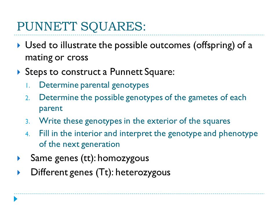 PUNNETT SQUARES:  Used to illustrate the possible outcomes (offspring) of a mating or cross  Steps to construct a Punnett Square: 1.