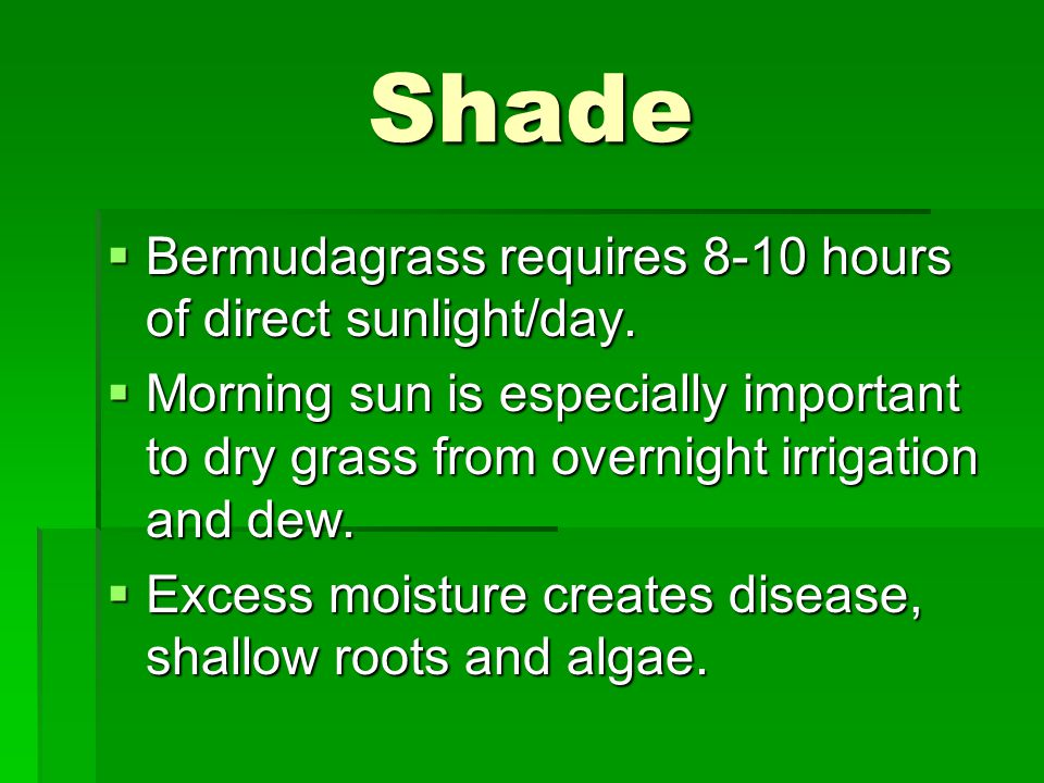 Shade  Bermudagrass requires 8-10 hours of direct sunlight/day.
