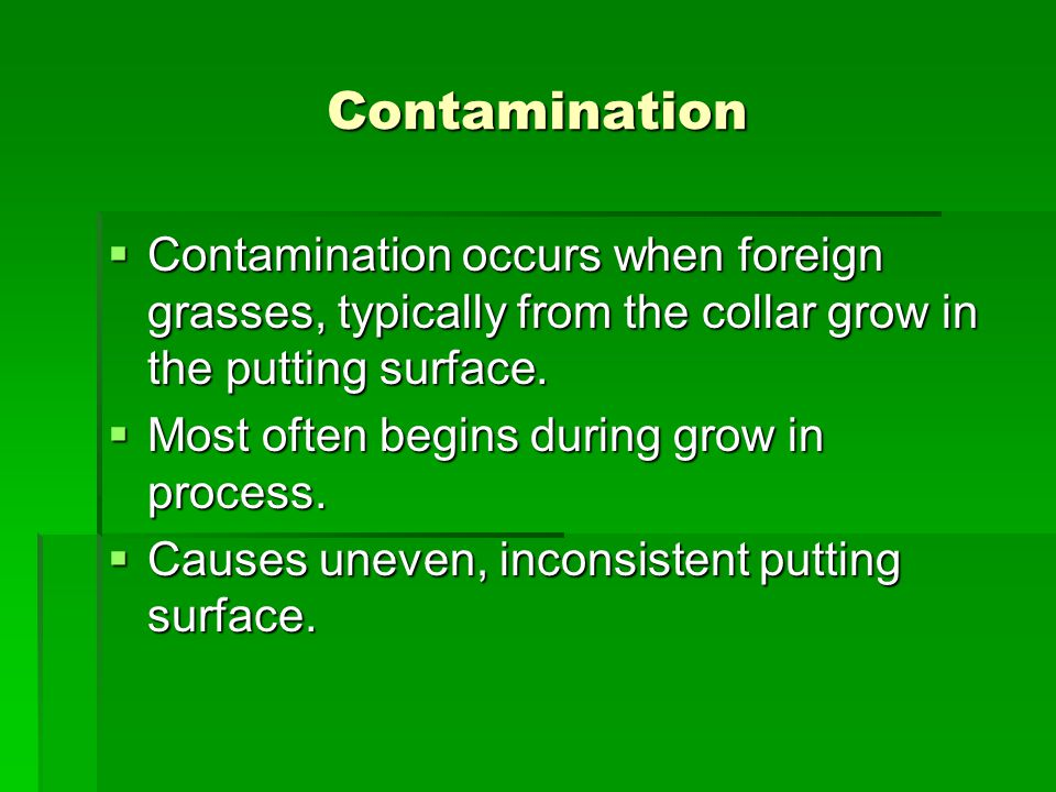 Contamination  Contamination occurs when foreign grasses, typically from the collar grow in the putting surface.