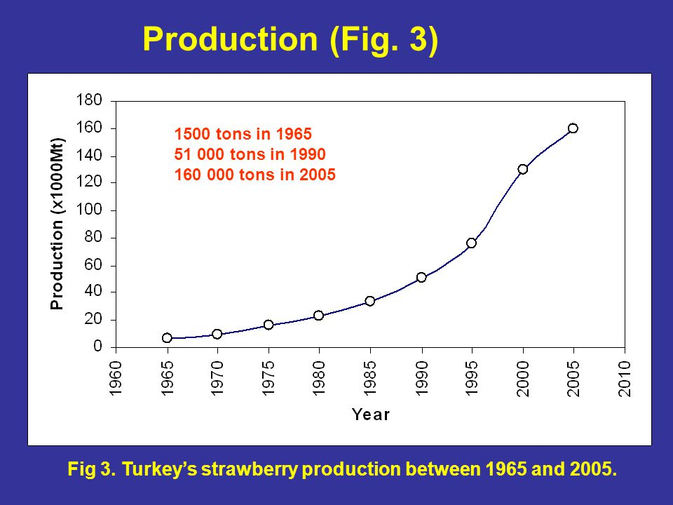 Production (Fig. 3) Fig 3. Turkey's strawberry production between 1965 and 2005. 1500 tons in 1965 51 000 tons in 1990 160 000 tons in 2005