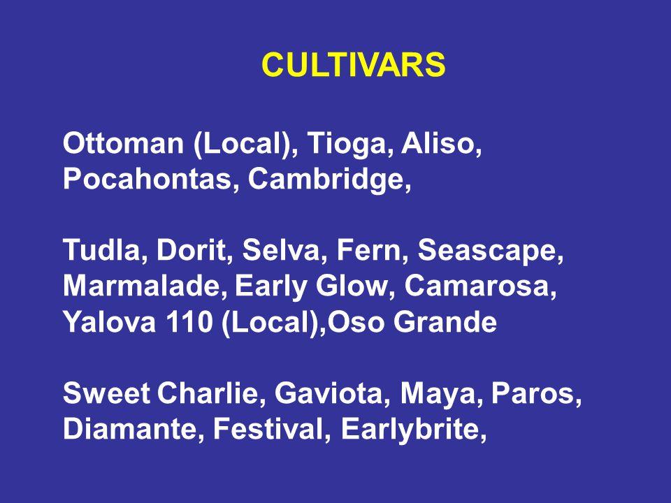 CULTIVARS Ottoman (Local), Tioga, Aliso, Pocahontas, Cambridge, Tudla, Dorit, Selva, Fern, Seascape, Marmalade, Early Glow, Camarosa, Yalova 110 (Loca