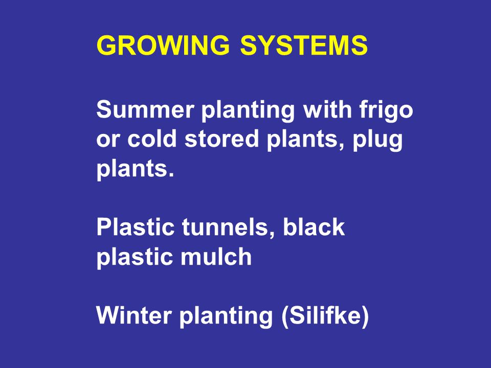GROWING SYSTEMS Summer planting with frigo or cold stored plants, plug plants. Plastic tunnels, black plastic mulch Winter planting (Silifke)