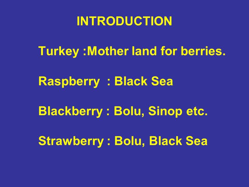 INTRODUCTION Turkey :Mother land for berries. Raspberry : Black Sea Blackberry : Bolu, Sinop etc. Strawberry : Bolu, Black Sea