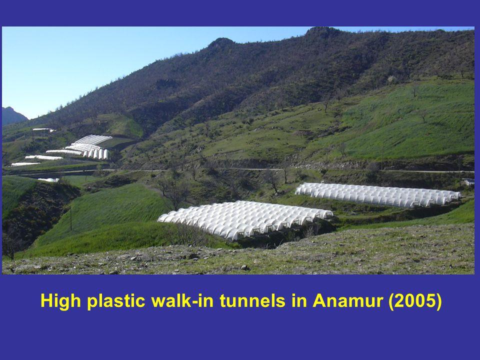 High plastic walk-in tunnels in Anamur (2005)