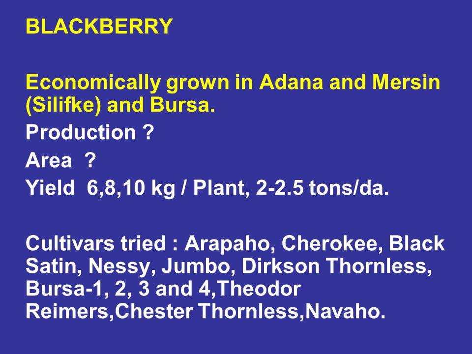 BLACKBERRY Economically grown in Adana and Mersin (Silifke) and Bursa. Production ? Area ? Yield 6,8,10 kg / Plant, 2-2.5 tons/da. Cultivars tried : A