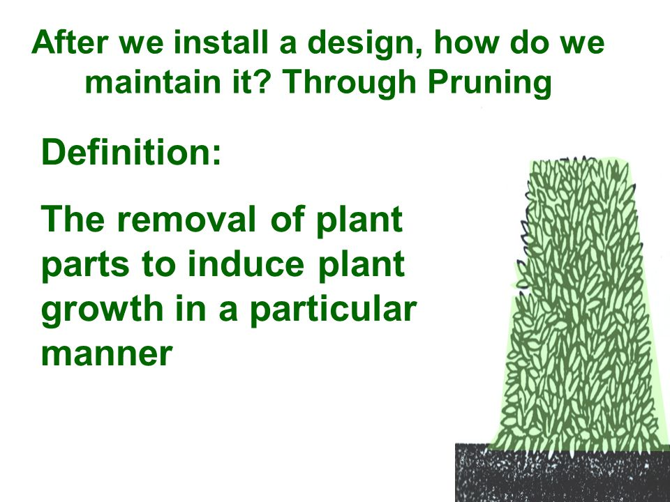 After we install a design, how do we maintain it? Through Pruning Definition: The removal of plant parts to induce plant growth in a particular manner