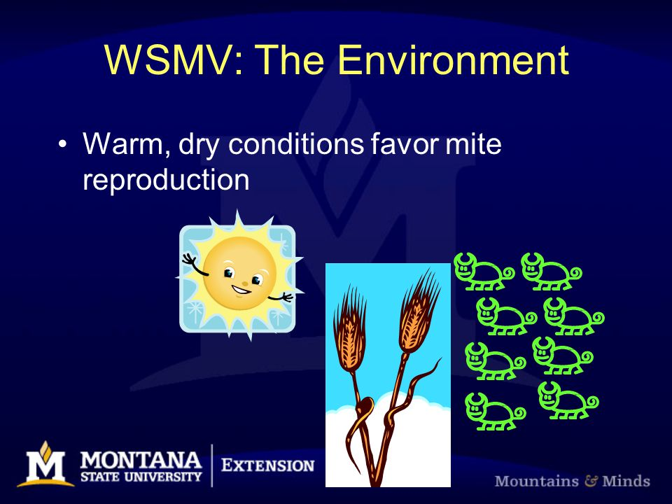 WSMV: The Environment Warm, dry conditions favor mite reproduction