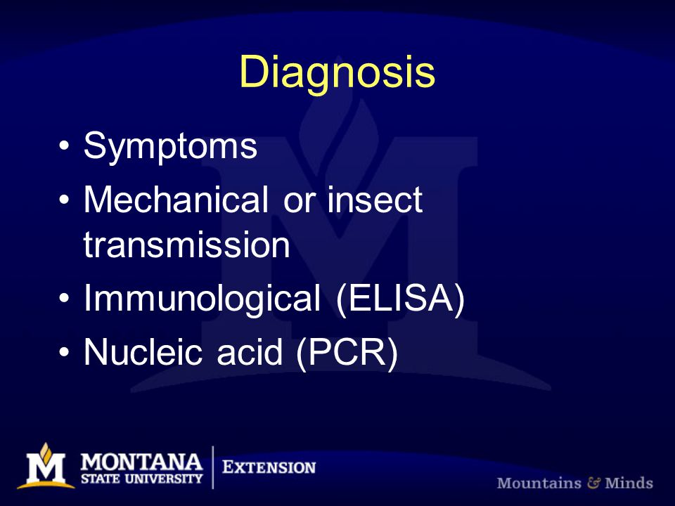 Diagnosis Symptoms Mechanical or insect transmission Immunological (ELISA) Nucleic acid (PCR)