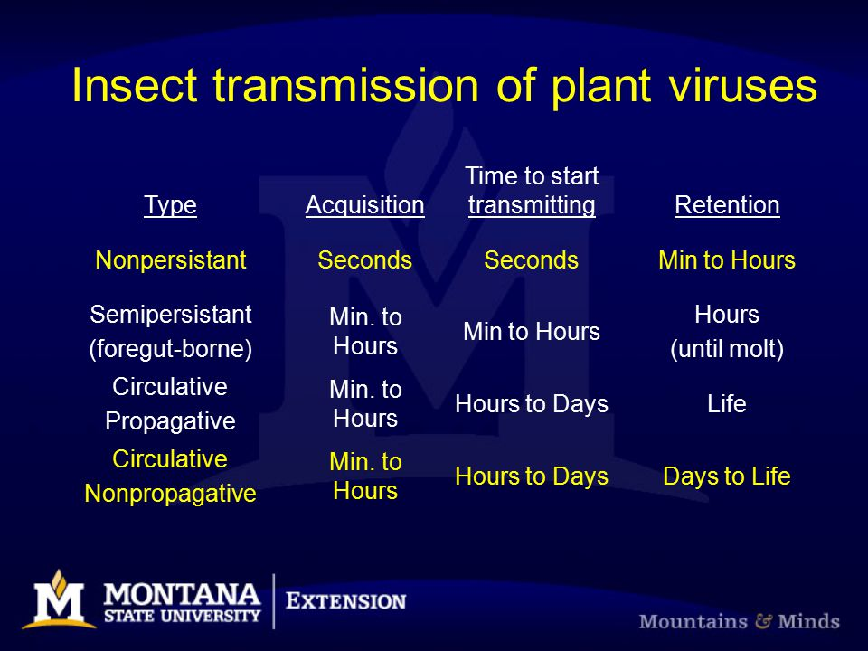 Insect transmission of plant viruses TypeAcquisition Time to start transmittingRetention NonpersistantSeconds Min to Hours Semipersistant (foregut-bor