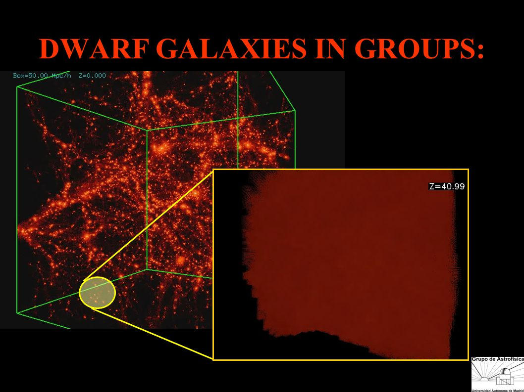 DWARF GALAXIES IN GROUPS: