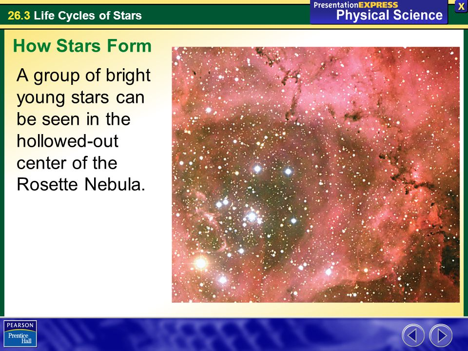 26.3 Life Cycles of Stars A group of bright young stars can be seen in the hollowed-out center of the Rosette Nebula. How Stars Form
