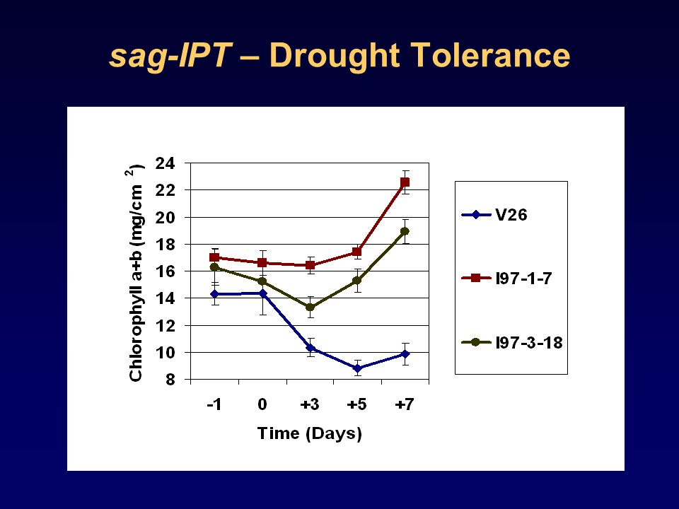 sag-IPT – Drought Tolerance