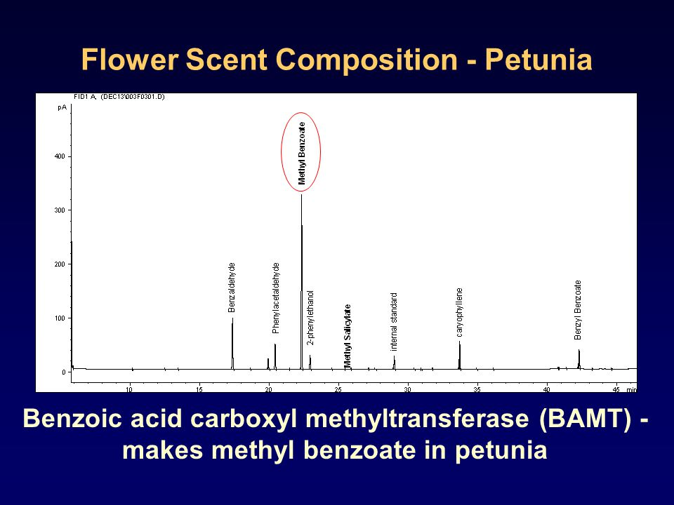 Flower Scent Composition - Petunia Benzoic acid carboxyl methyltransferase (BAMT) - makes methyl benzoate in petunia
