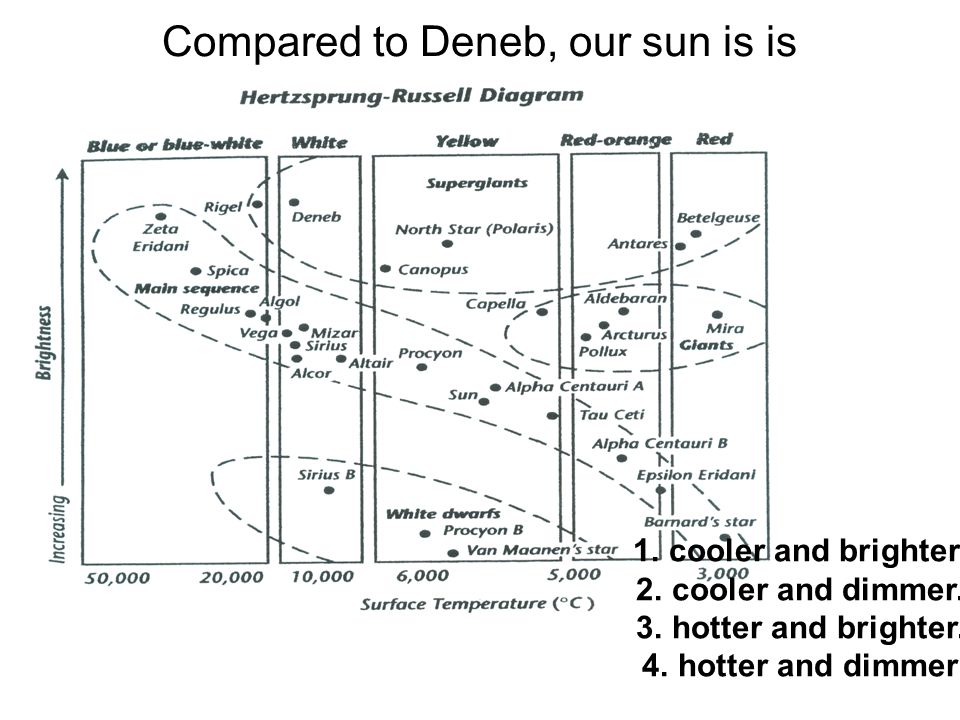 Compared to Deneb, our sun is is 1.cooler and brighter.