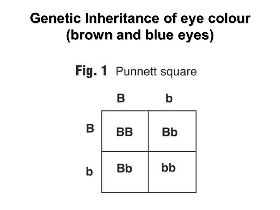 Genetic Inheritance of eye colour (brown and blue eyes)