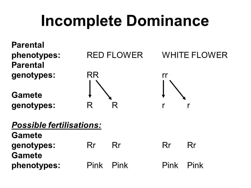Incomplete Dominance Parental phenotypes:RED FLOWERWHITE FLOWER Parental genotypes:RRrr Gamete genotypes:RRrr Possible fertilisations: Gamete genotypes:RrRrRrRr Gamete phenotypes:PinkPinkPinkPink