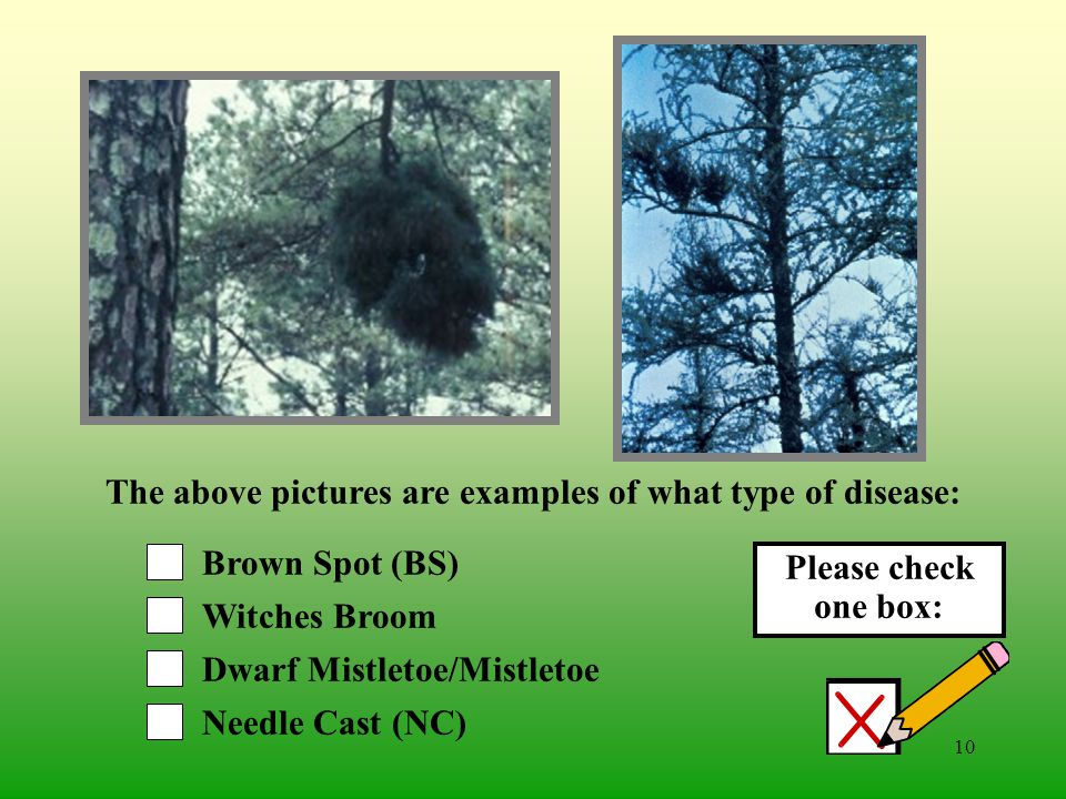 9 Brown Spot (BS) Needle Cast (NC) Dwarf Mistletoe/Mistletoe Red Heart The above pictures are examples of what type of disease: Please check one box: