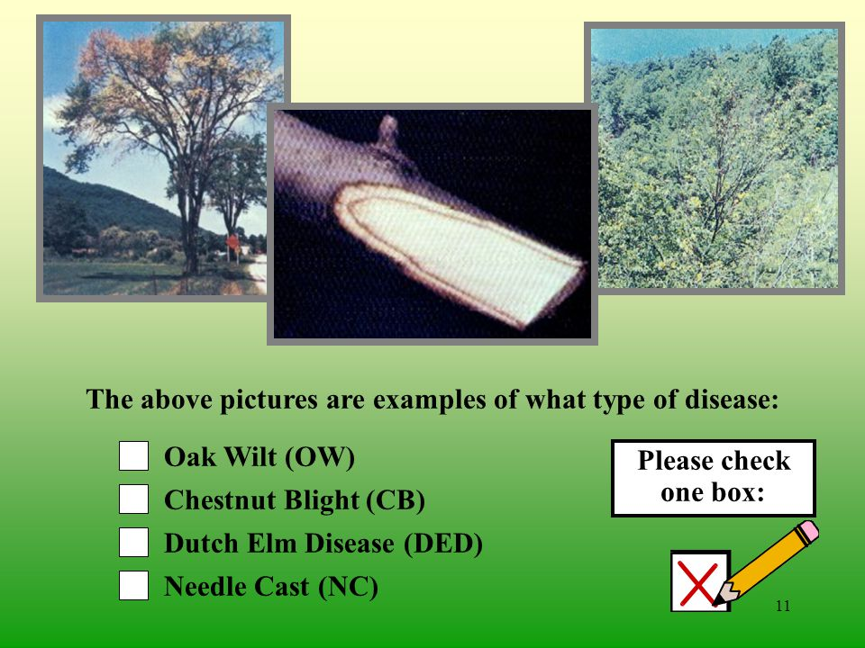 10 Brown Spot (BS) Witches Broom Dwarf Mistletoe/Mistletoe Needle Cast (NC) The above pictures are examples of what type of disease: Please check one box: