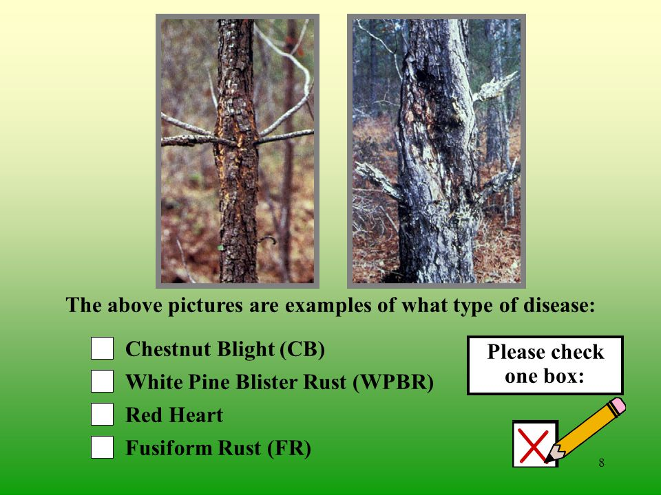 7 Cedar-Apple Rust (CAR) White Pine Blister Rust (WPBR) Oak Wilt (OW) Fusiform Rust (FR) The above pictures are examples of what type of disease: Please check one box: