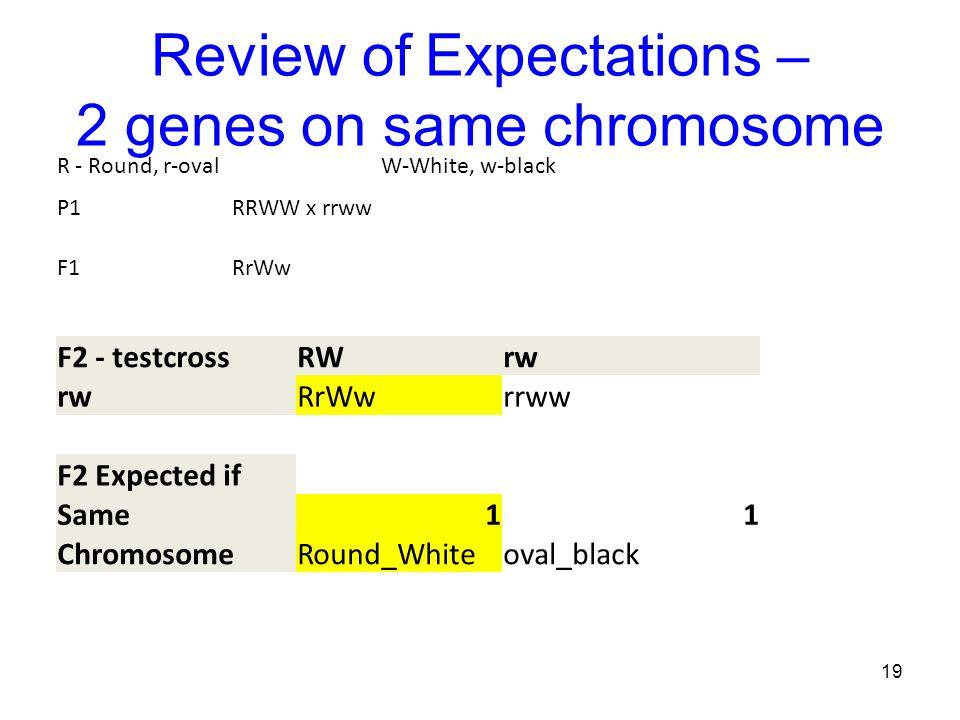 Review of Expectations – 2 genes on same chromosome 19 R - Round, r-ovalW-White, w-black P1RRWW x rrww F1RrWw F2 - testcrossRWrw RrWwrrww F2 Expected