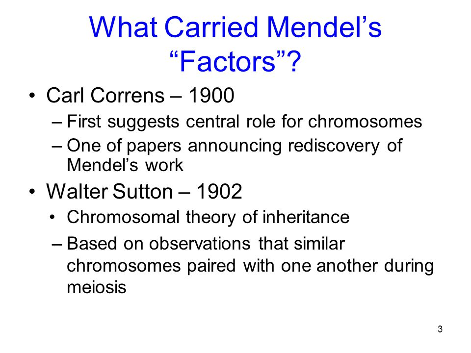"""What Carried Mendel's """"Factors""""? Carl Correns – 1900 –First suggests central role for chromosomes –One of papers announcing rediscovery of Mendel's wo"""