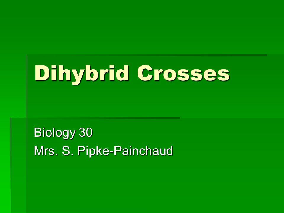 Dihybrid Crosses Biology 30 Mrs. S. Pipke-Painchaud