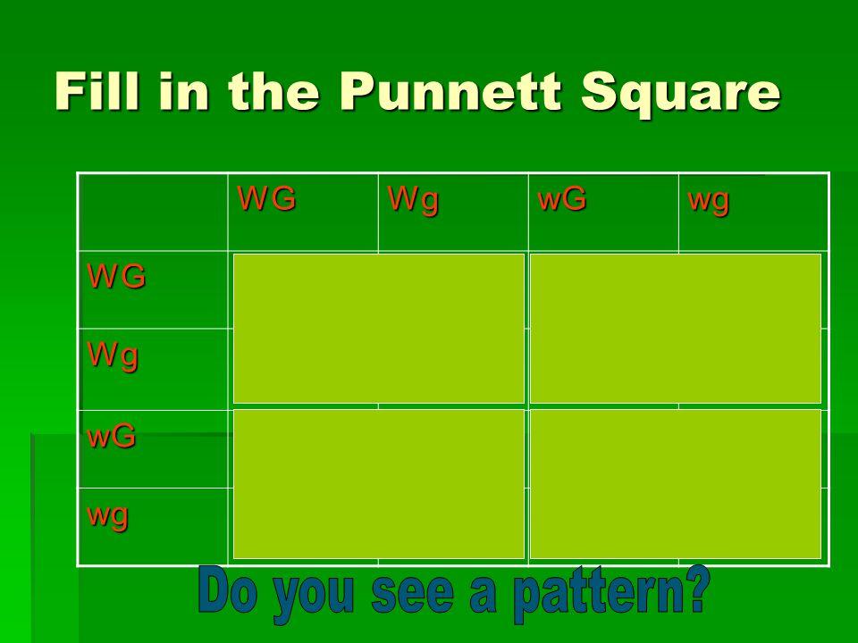 Fill in the Punnett Square WGWgwGwgWGWWGGWWGgWwGGWwGg WgWWGgWWggWwGgWwgg wGWwGGWwGgwwGGwwGg wgWwGgWwggwwGgwwgg