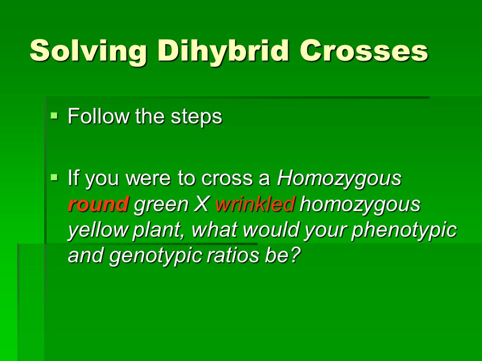 Solving Dihybrid Crosses  Follow the steps  If you were to cross a Homozygous round green X wrinkled homozygous yellow plant, what would your phenotypic and genotypic ratios be