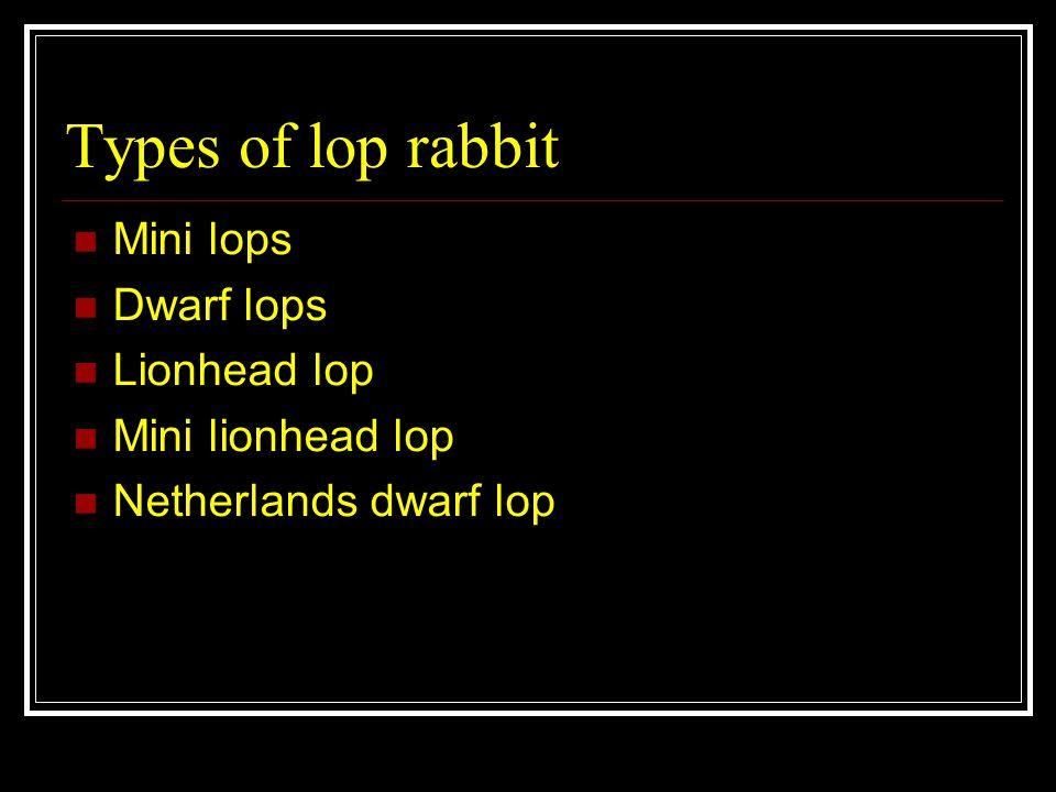 Types of lop rabbit Mini lops Dwarf lops Lionhead lop Mini lionhead lop Netherlands dwarf lop