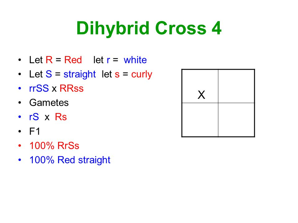 Dihybrid Cross 4 Let R = Red let r = white Let S = straight let s = curly rrSS x RRss Gametes rS x Rs F1 100% RrSs 100% Red straight X rS Rs RrSs