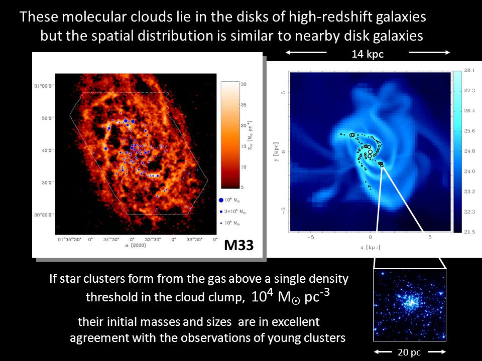 14 kpc 20 pc M33 If star clusters form from the gas above a single density threshold in the cloud clump, 10 4 M  pc -3 their initial masses and sizes are in excellent agreement with the observations of young clusters These molecular clouds lie in the disks of high-redshift galaxies but the spatial distribution is similar to nearby disk galaxies