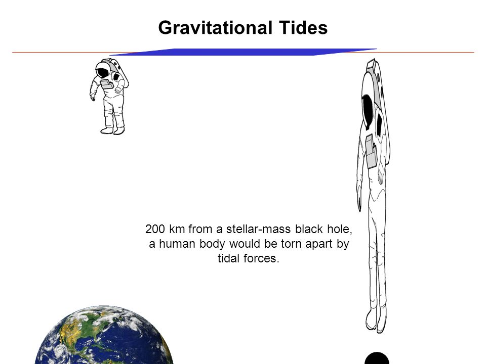 Gravitational Tides 200 km from a stellar-mass black hole, a human body would be torn apart by tidal forces.