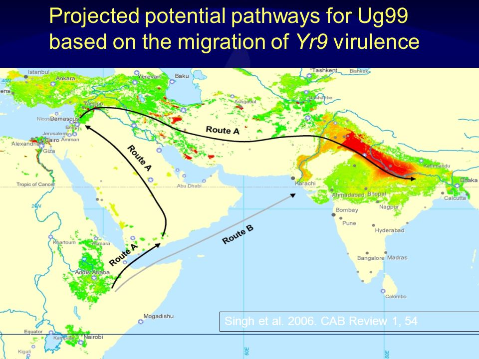 Ug99 migration Singh et al. 2008. Advances in Agronomy v98 1998 2001? 2004 2003? 2005 2006 2007