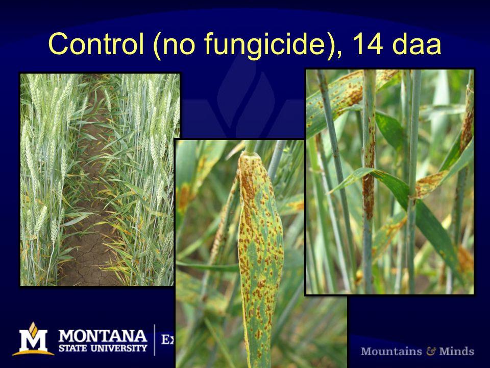 Control (no fungicide), 14 daa